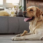 Is Flax Seed Safe To Feed Dogs?: 6 Things to Keep in Mind