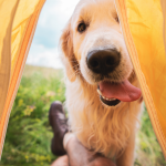 Camping with a dog that has digestive issues