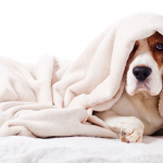 13 Foods that can help if your dog has diarrhea or vomiting