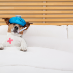 5 safe over the counter medications for vomiting & diarrhea in dogs