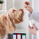 Budesonide or Prednisone, finding the best treatment for IBD in your dog?