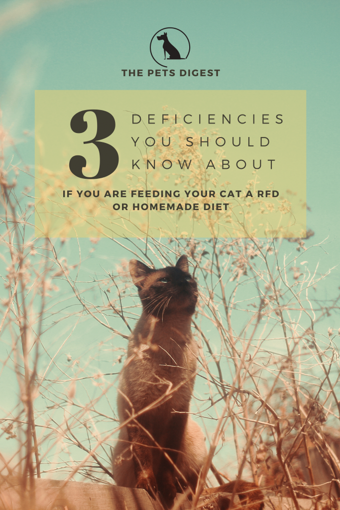 3 deficiencies you should know about if you are feeding your cat a homemade diet