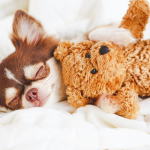 How to care for a sick dog & keep them comfortable