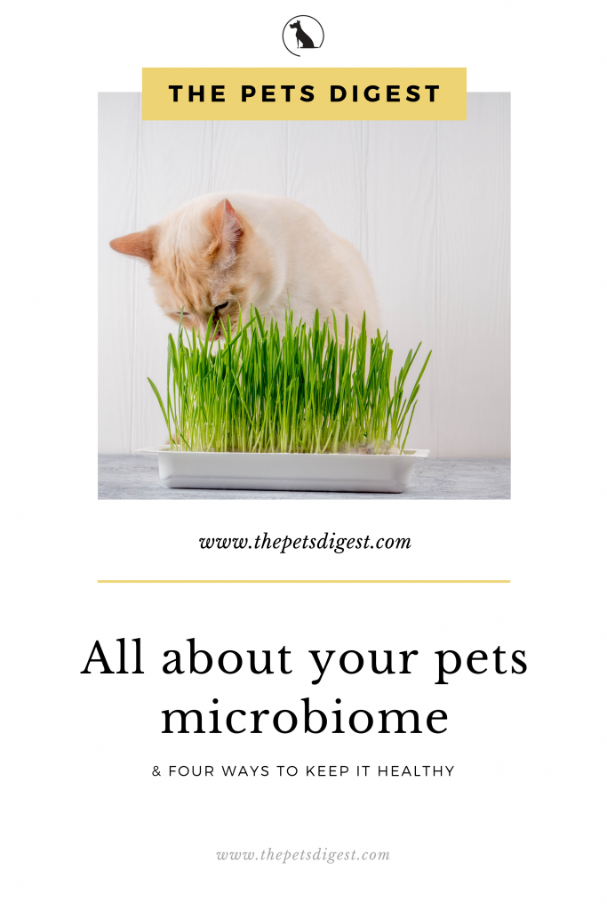 cat eating wheat grass microbiome healthy pets