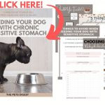 Get your free feeding guide for dogs with sensitive stomachs