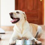 Bone Broth for dogs: What you need to know!