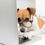 Top 10 free apps for dog owners in 2020