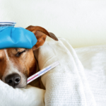 How to comfort a dog with pancreatitis