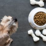 10 low-fat foods your dog will actually want to eat