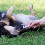 Feeding your dog: How much, how often, and what you should feed your dog