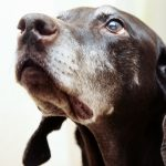 6 Things you should change in your dogs diet when they are seniors
