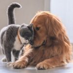 Covid-19 in dogs & cats: 16 things you need to know